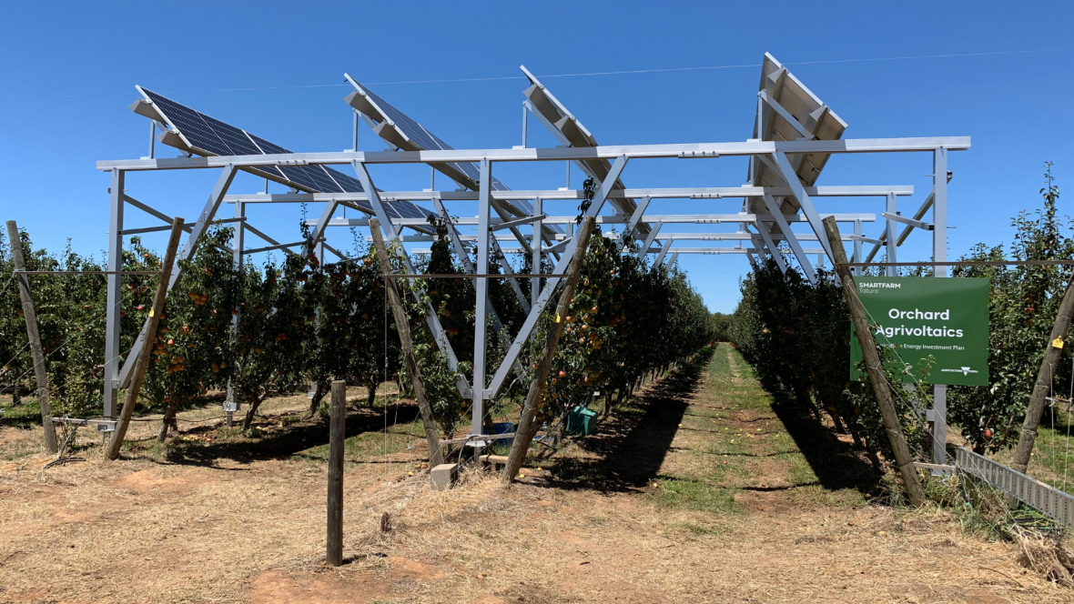 Solar panels above trees in a pear orchard at the Tatura SmartFarms