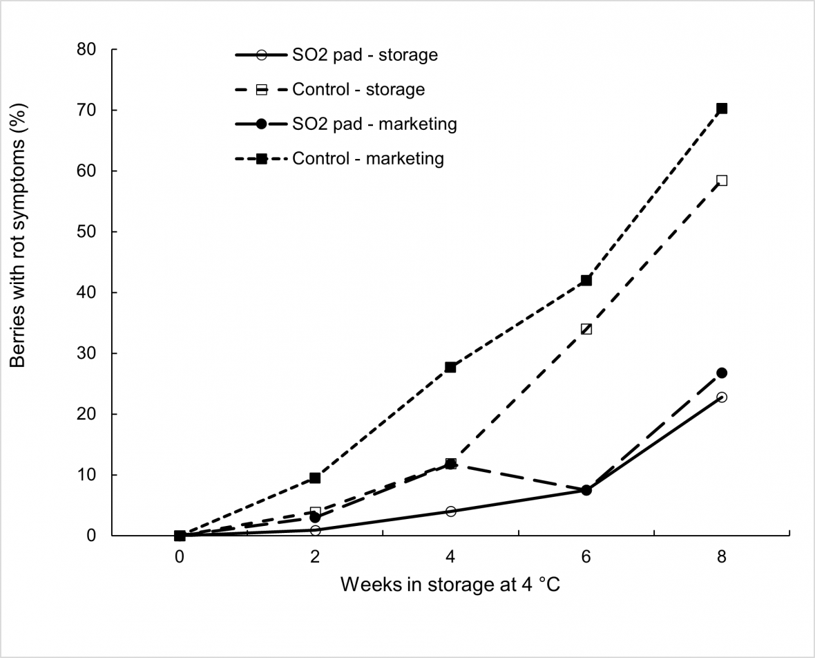 Effect of SO2 treatment, storage duration at 4 °C, and marketing for 3 days at 18 °C on bunch rot incidence in 'Thompson Seedless' grapes with each mean based on four replicate cartons.