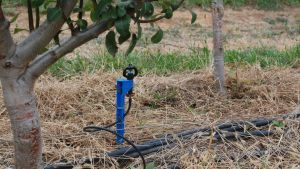 Pear irrigation experiments