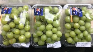 Table grapes: Real-time temperature monitoring for sea-freight to Asia