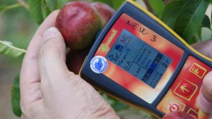 Stonefruit maturity & fruit quality