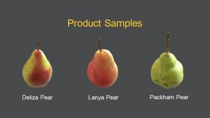 Blush pear export market research