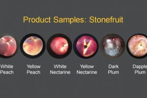 Stonefruit export market research