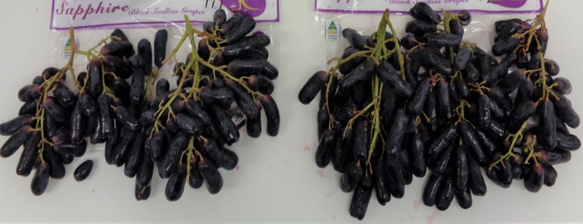 SO2-treated 'Sweet Sapphire' grape quality after simulated sea freight, importer storage and distribution.