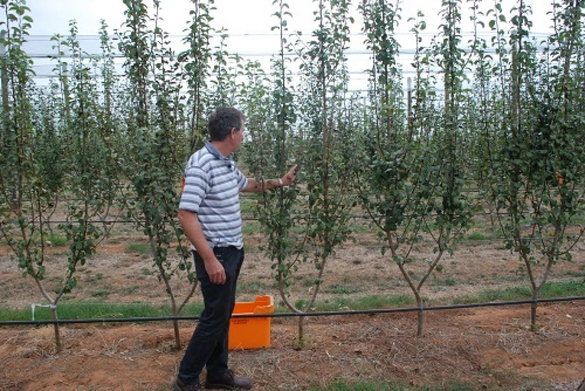 Dr Ian Goodwin at Tatura Pear Field Laboratory with a Two Leader Tree Training System