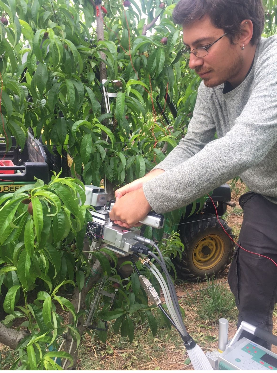 Alessio Scalisi in the stonefruit research orchard