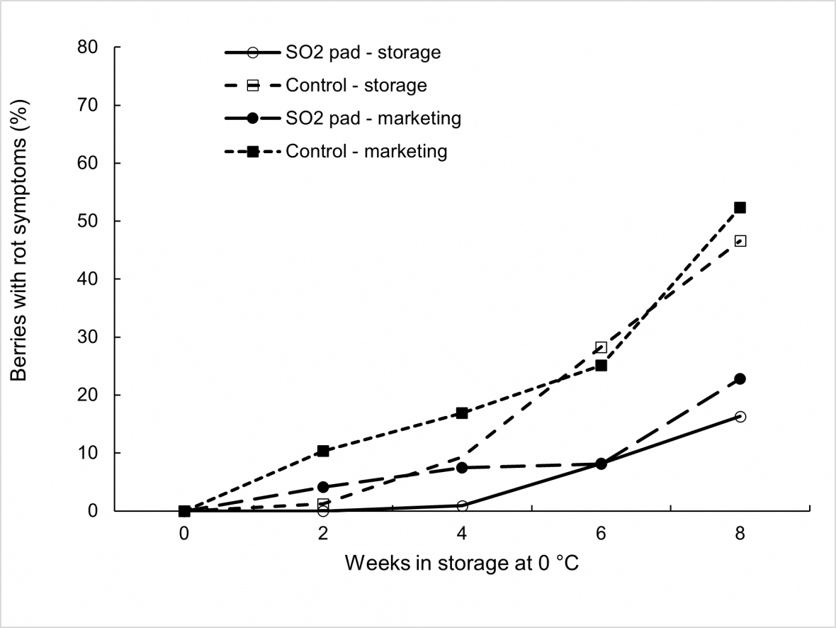 Effect of SO2 treatment, storage duration at 0 °C, and marketing for 3 days at 18 °C on bunch rot incidence in 'Thompson Seedless' grapes with each mean based on four replicate cartons.
